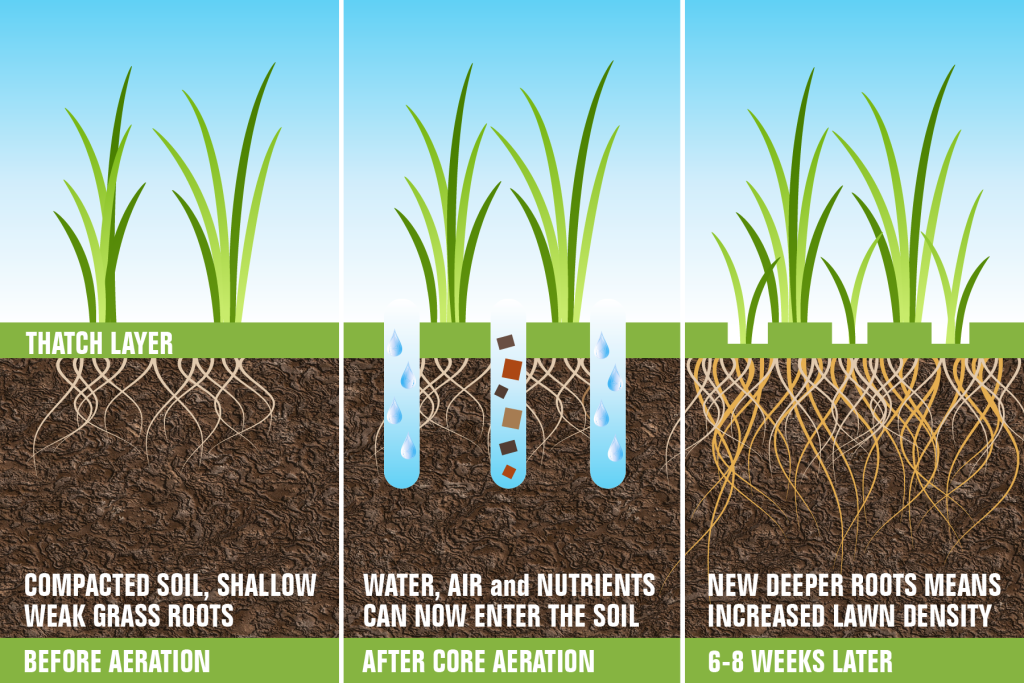 planting grass seed how long to grow